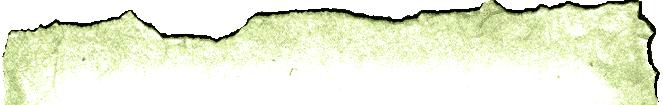 Portfolio Top